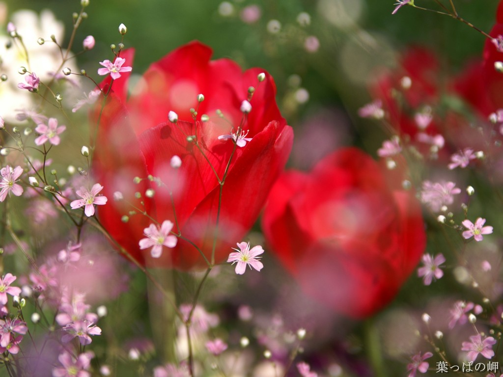 amazing free hd flower wallpapers techlovers l web design