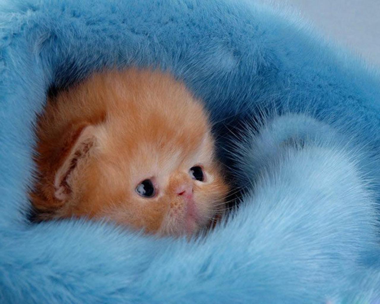 adorable kitten small Wallpaper 1280x1024