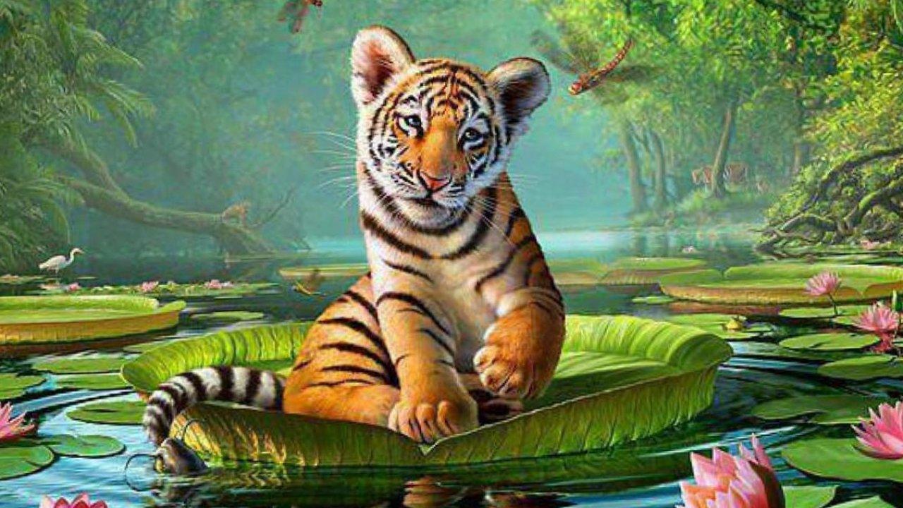 Animal Wallpapers Animal Planet Desktop Images Animal 1280x720