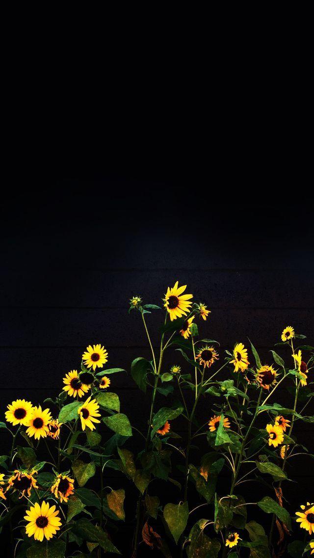 Nature Wallpaper Iphone Black   Iphone Plus Sunflower Background 640x1137