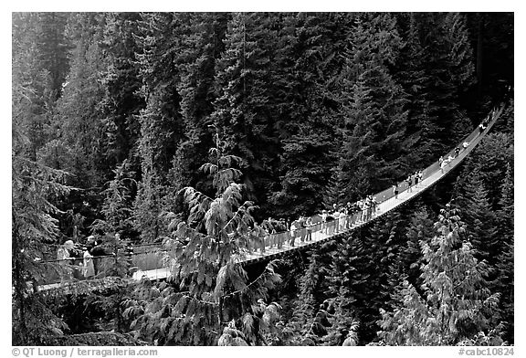 Black and White Picturephoto Conifer Forests Capilano suspension 576x392