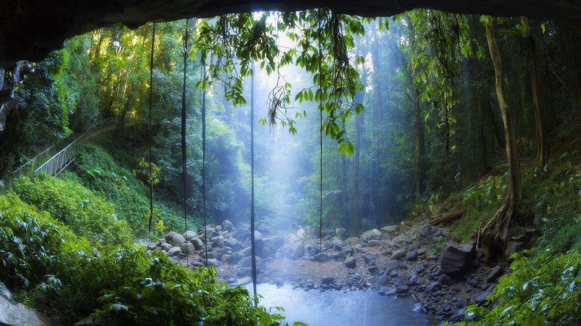 [73+] Tropical Rainforest Wallpaper on WallpaperSafari