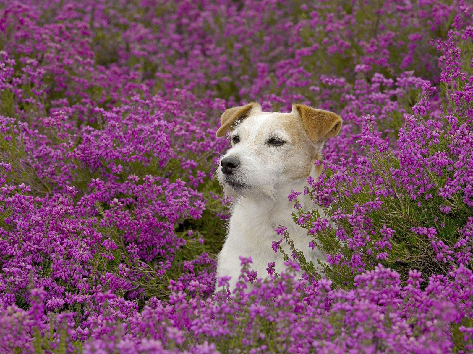 Spring Animals Desktop Wallpaper wallpaper Spring Animals Desktop 1600x1200