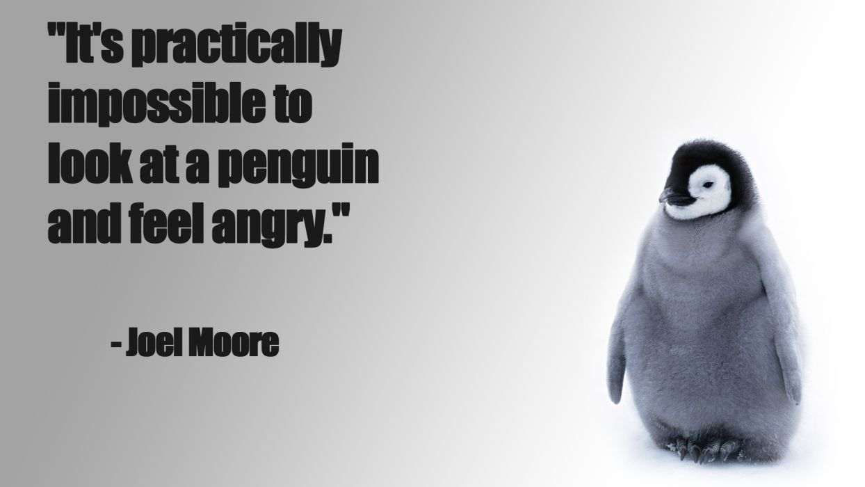Penguin funny baby chick snow cute wallpaper 1920x1080 124241 1244x700