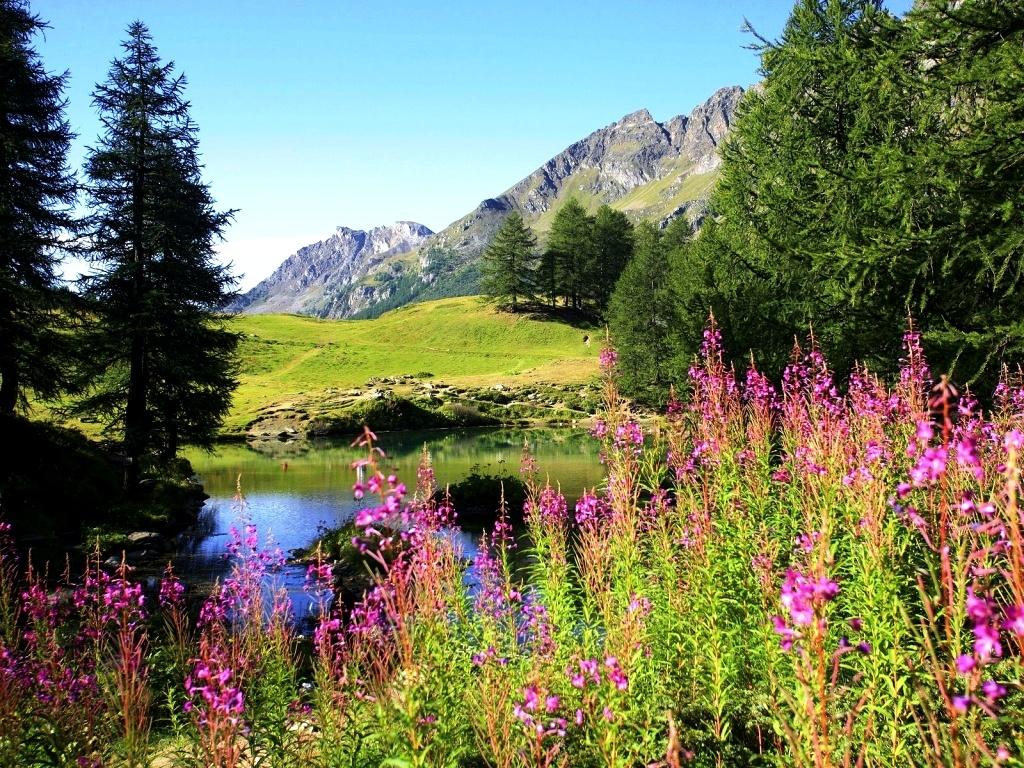 Choose Your Favorite Spring Scenes For Desktop Beautiful 1024x768