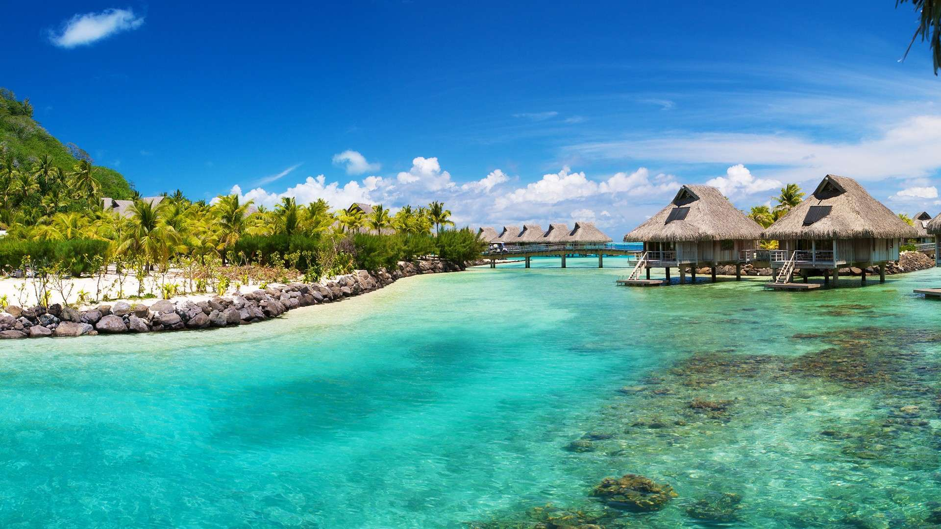 Tropical Island Wallpaper 8541 Hd Wallpapers in Beach   Imagescicom 1920x1080
