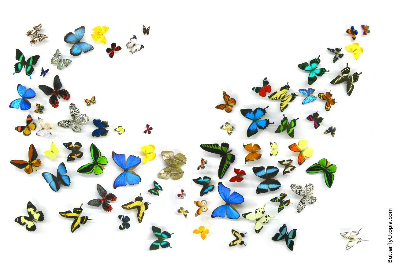 Free Animated Butterflies Desktop Wallpaper - WallpaperSafari