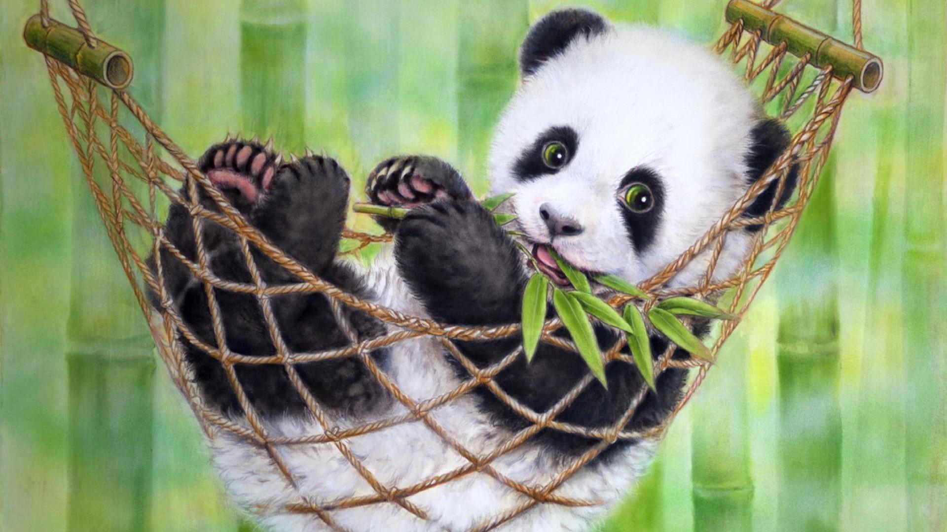 Baby Panda Wallpapers   Bhstormcom 1920x1080