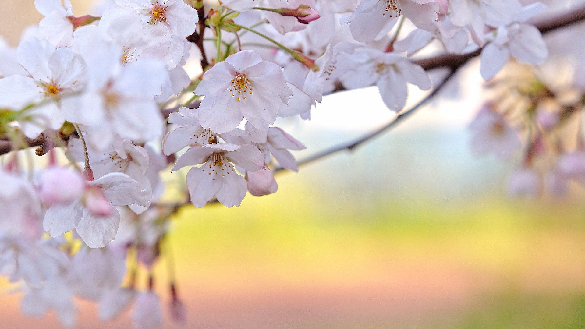 Spring Flowers Wallpapers High Resolution at Landscape Monodomo 1920x1080