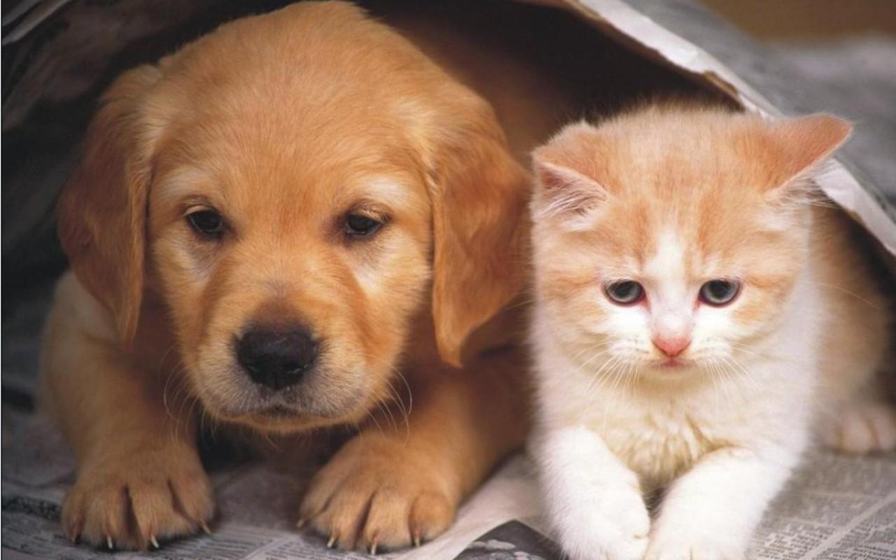 Dog and Cat Wallpaper   Teddybear64 Wallpaper 16834863 1280x800