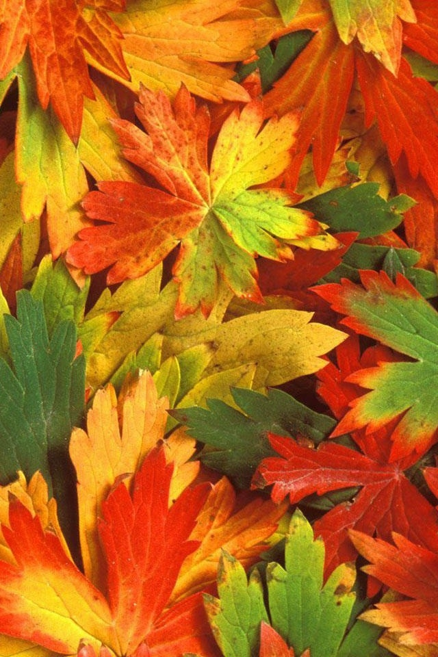 Fall Leaves Iphone Wallpaper Fall Leaves Iphone Wallpapers 640x960
