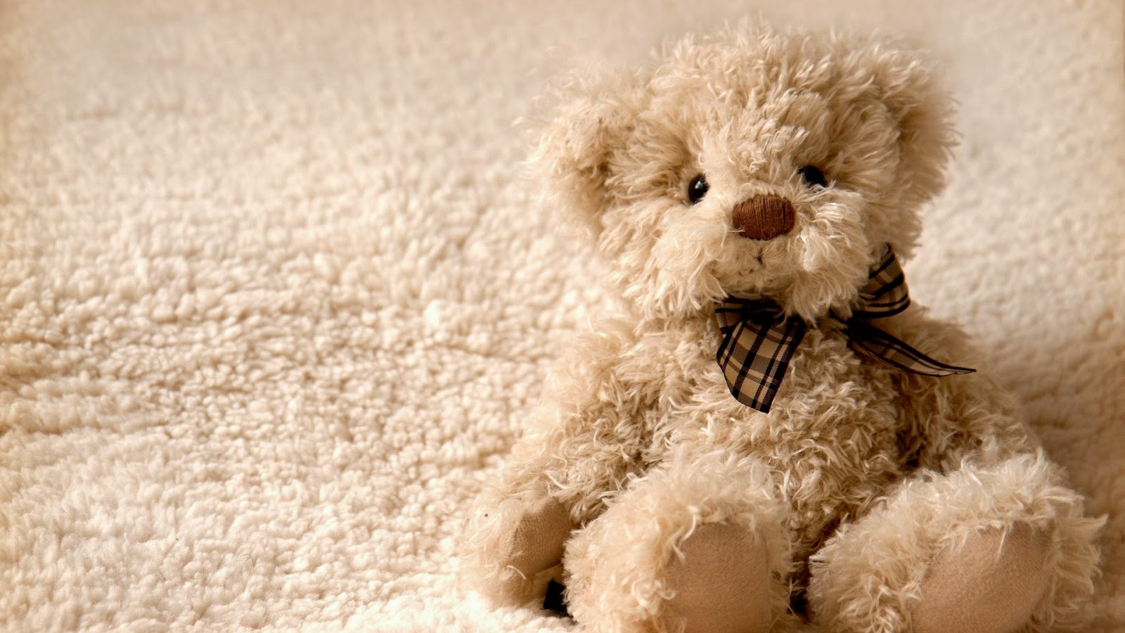 Lovely And Beautiful Teddy Bear Wallpapers Allfreshwallpaper 1600x900
