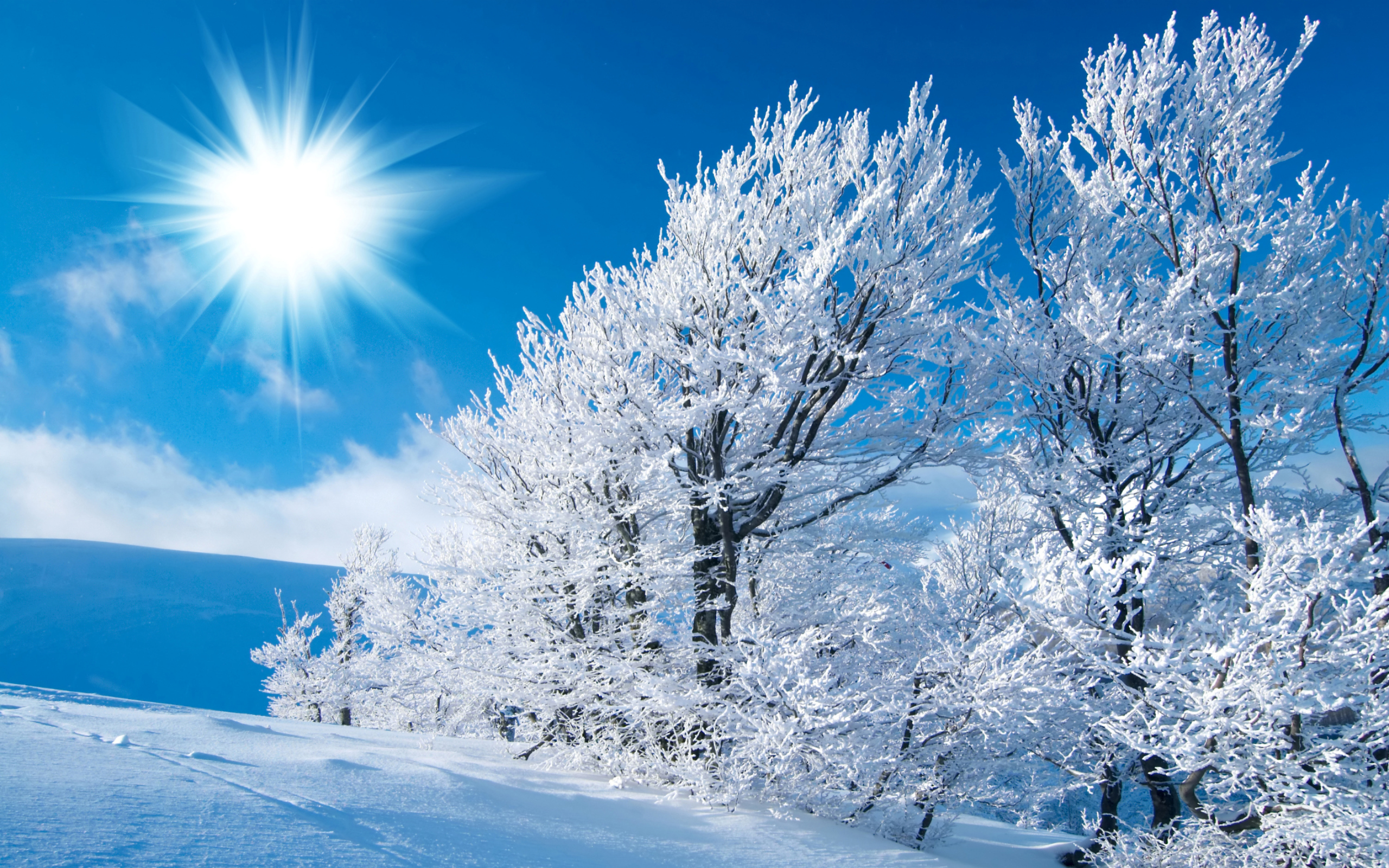 Wallpaper Winter Sun 2560x1600