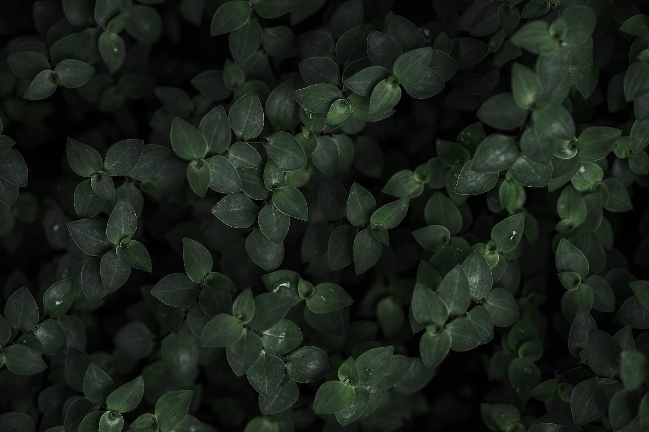 Dark Plant Background Stock Photo picjumbo 2210x1473
