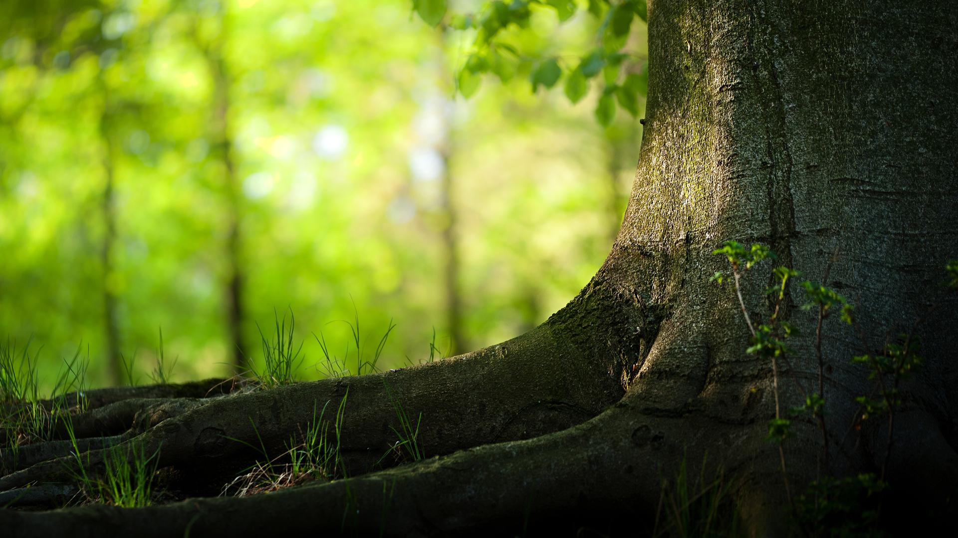 Nature Tree hd Desktop Backgrounds 1920x1080