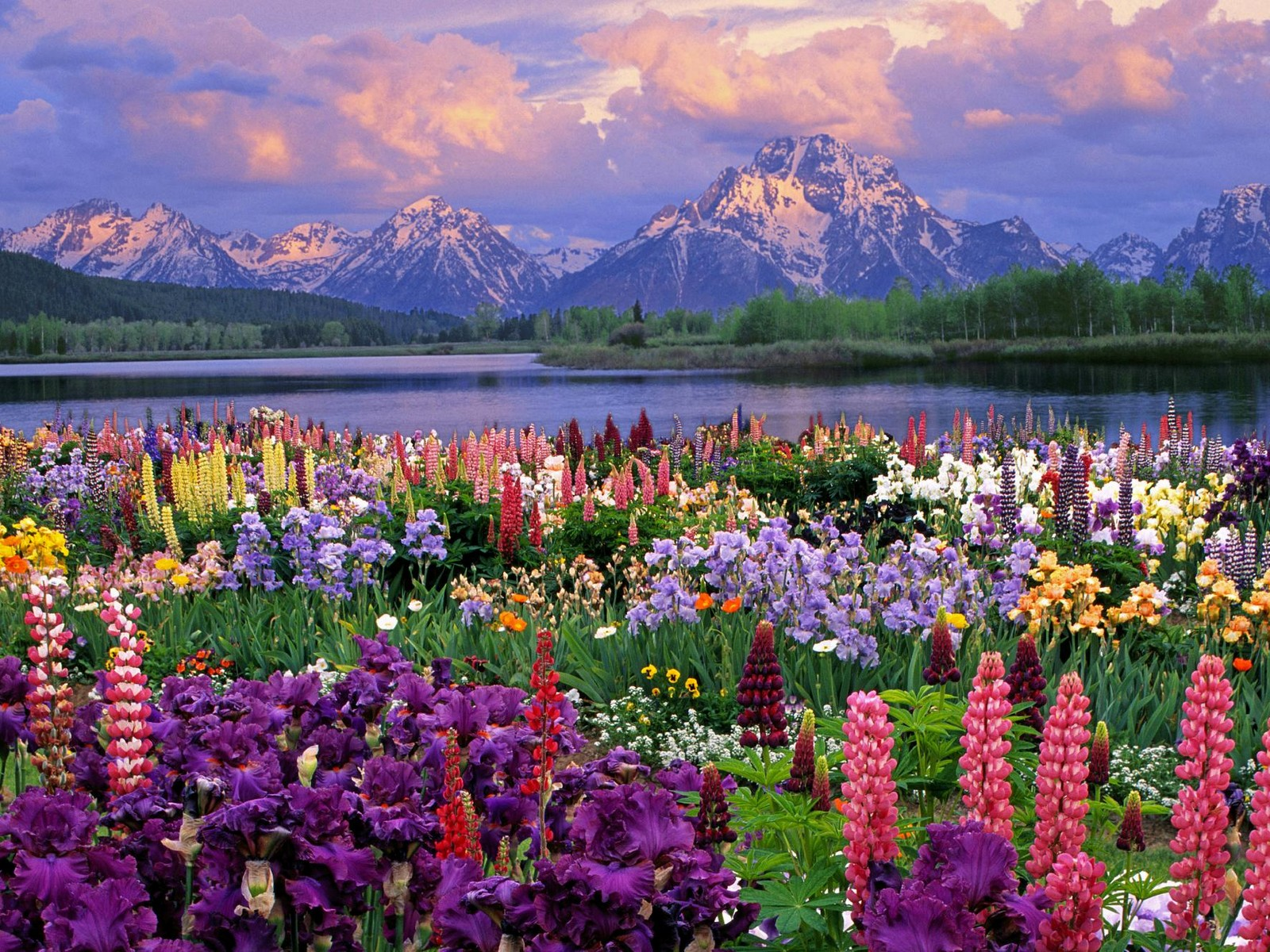 Teton and Wildflowers Wyoming   Flowers Photography Desktop Wallpapers 1600x1200