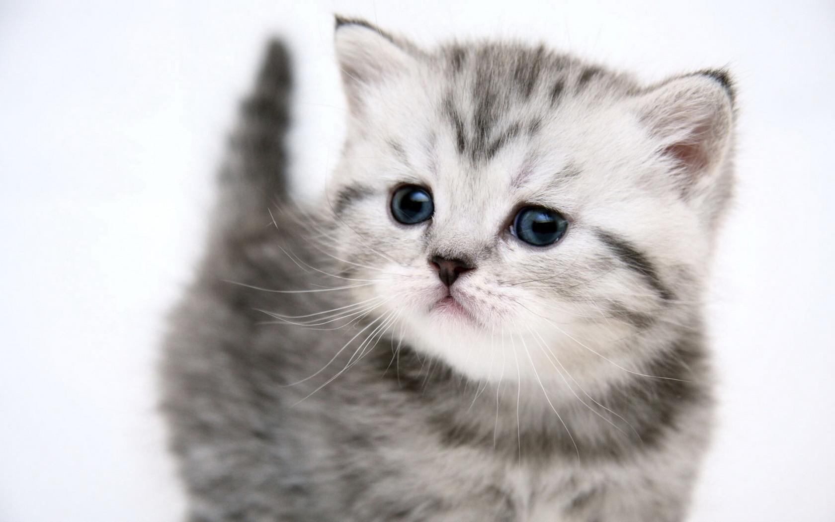 cute kitten kitten pussy cat uploaded silvery 2010 10 30 1680x1050