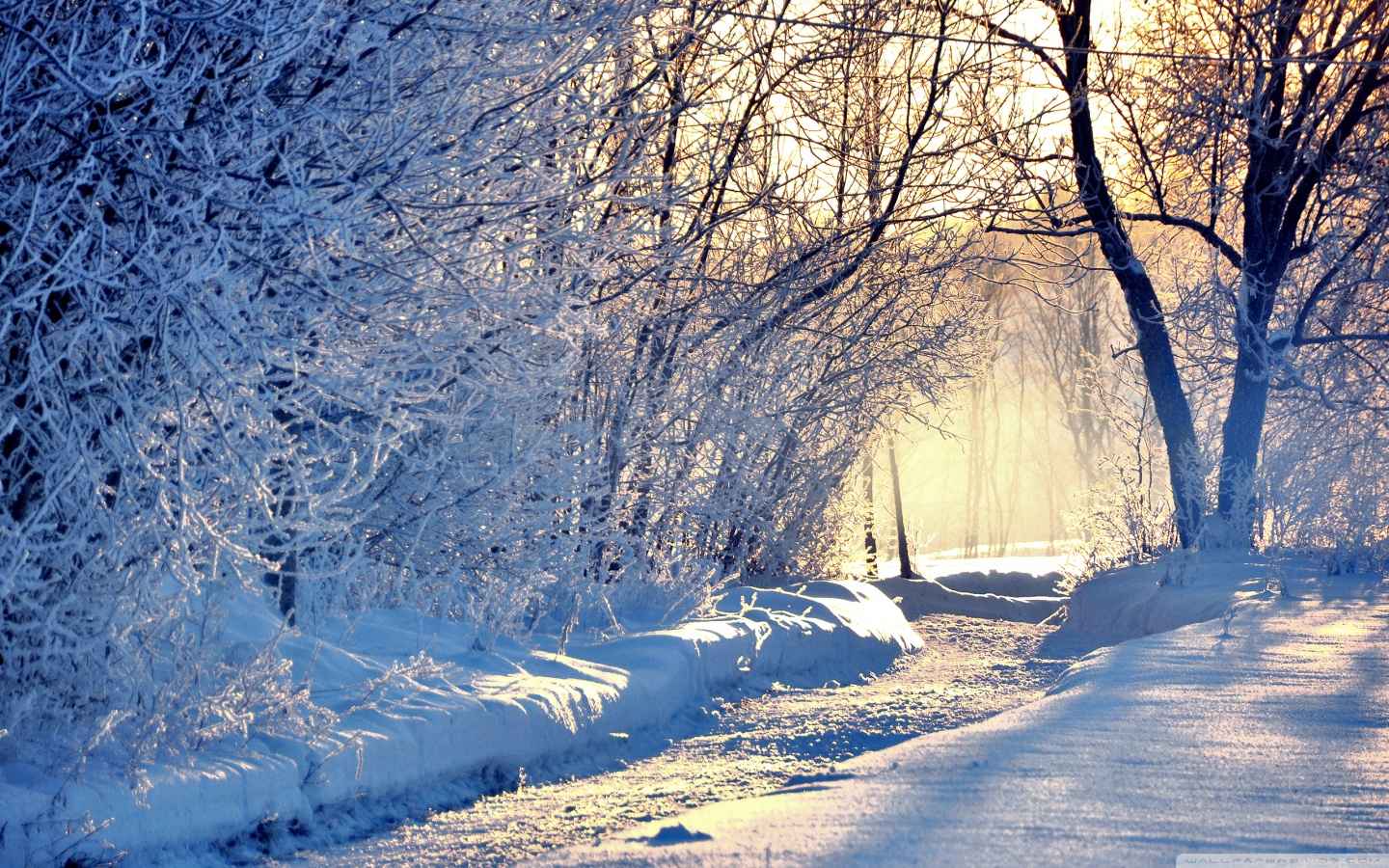 Winter Background Download picture of a natural hd winter 1440x900