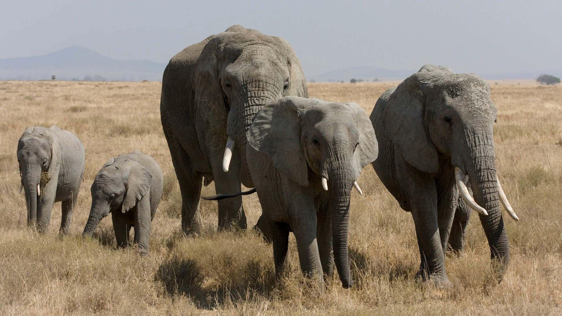 Must see Wallpaper High Quality Elephant - mrFtkb  Pic_463961.jpg