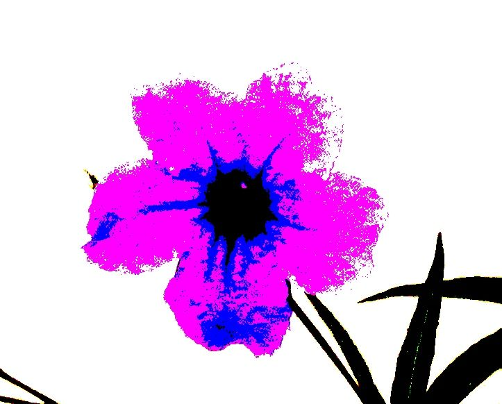 graphic from original photograph in a peter max andy warhol style 723x582