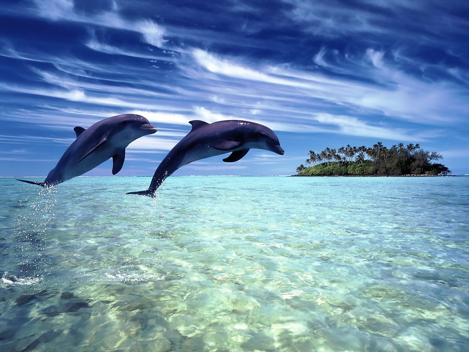 Dolphins Wallpaper Hd Desktop Wallpaper 1600x1200