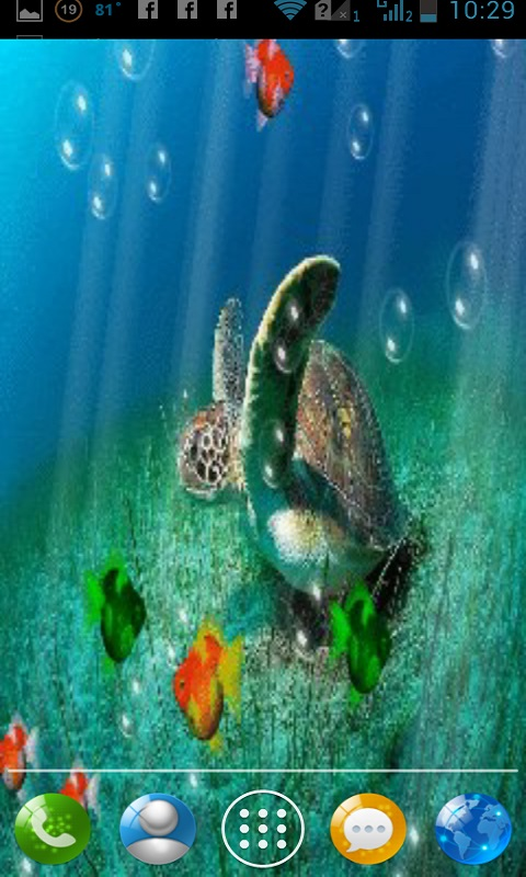 48 Free Turtle Wallpaper Downloads On Wallpapersafari