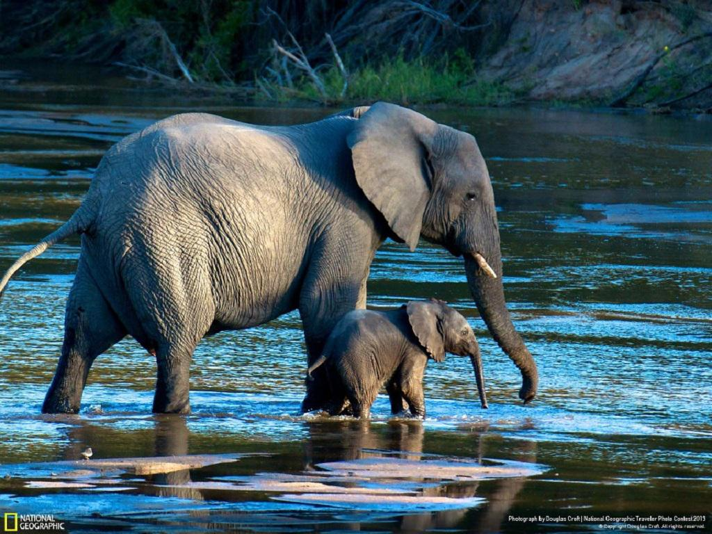 MAMA ELEPHANT BABY ELEPHANT WALLPAPER 137045 HD Wallpapers 1024x768