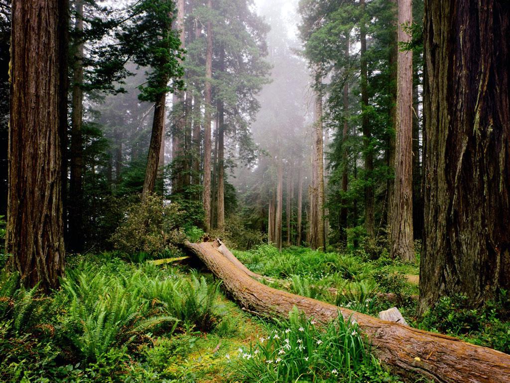 Desktop Wallpaper Redwood National Park h441152 Nature HD Images 1024x768
