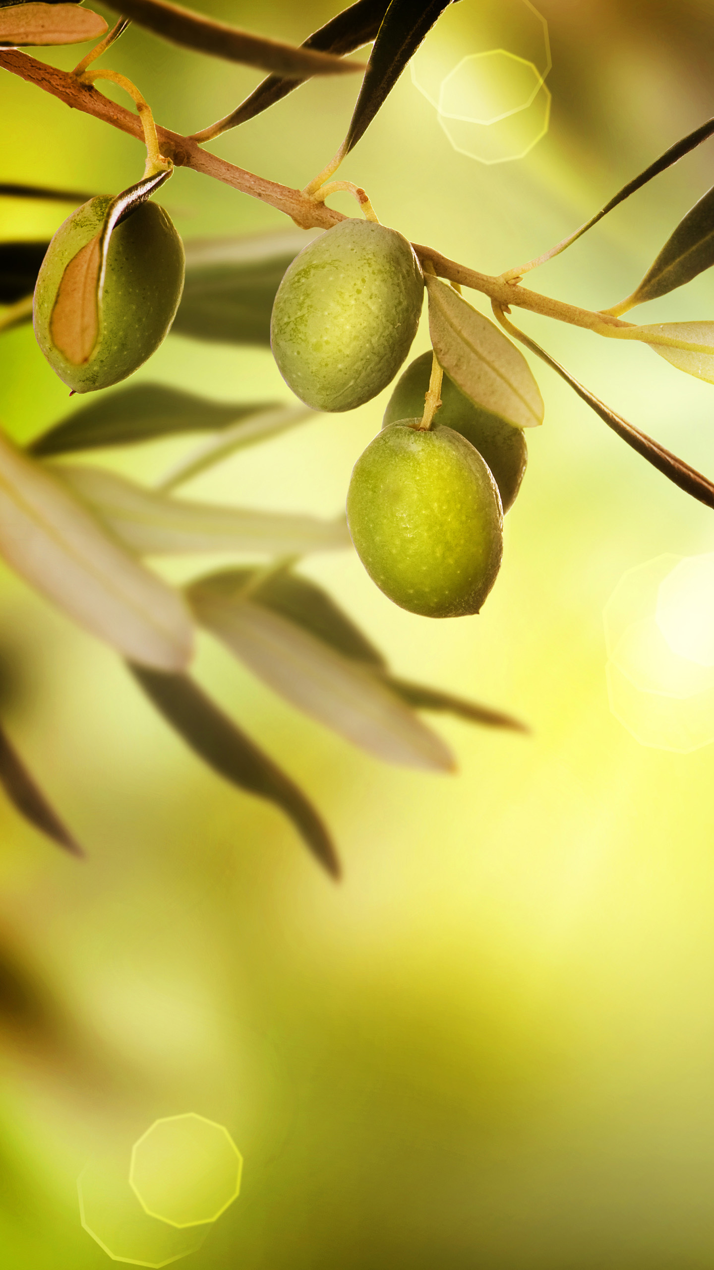 Phone Olive Wallpaper Full HD Pictures 1440x2560