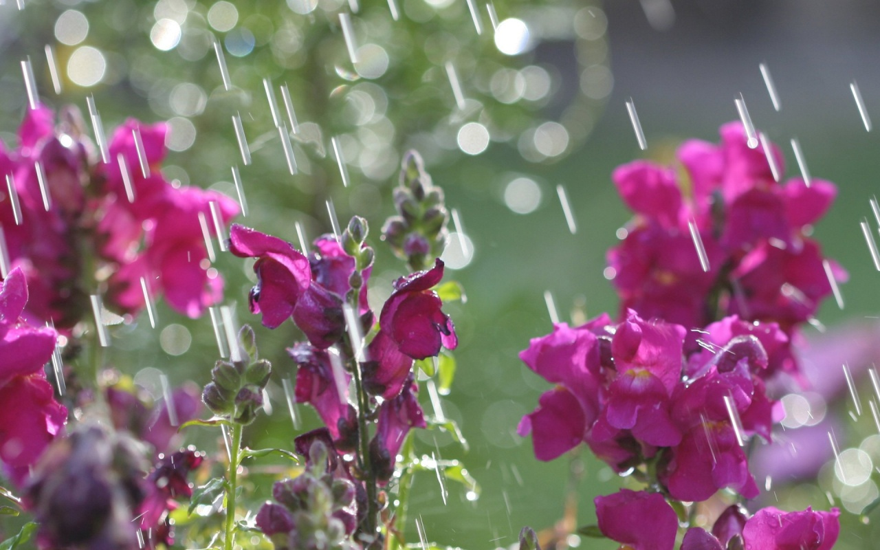 April Showers 2 1280x800 wallpaper download page 274559 1280x800
