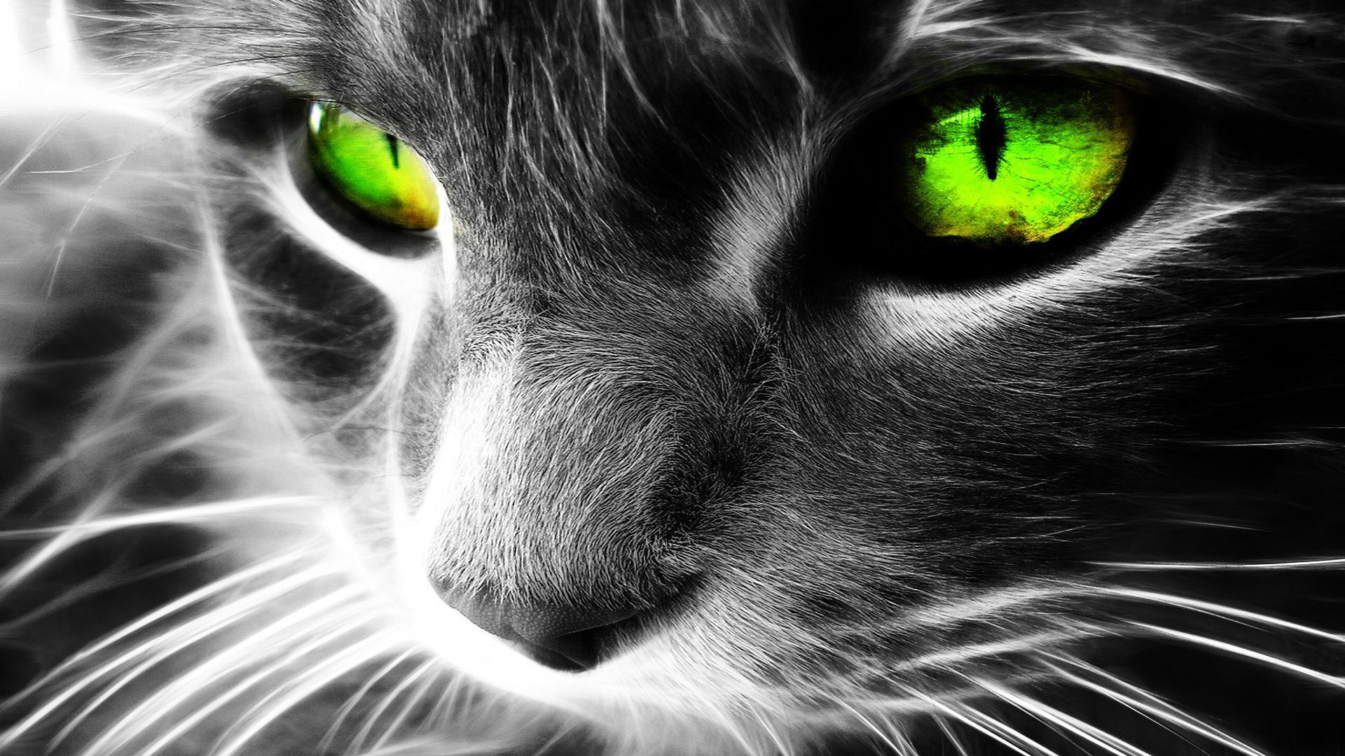 HD Wallpaper Animal Cats 1080P Download 1920x1080