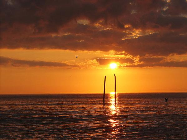 Carolina Morning background beach bird coast dolphin ocean 600x450