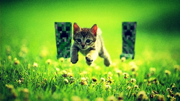 catsfunny cats funny minecraft 1920x1080 wallpaper Cats Wallpaper 600x337