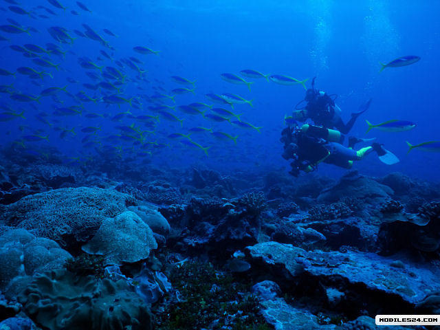 Diving Samsung Galaxy Prevail Wallpaper download   Download 640x480