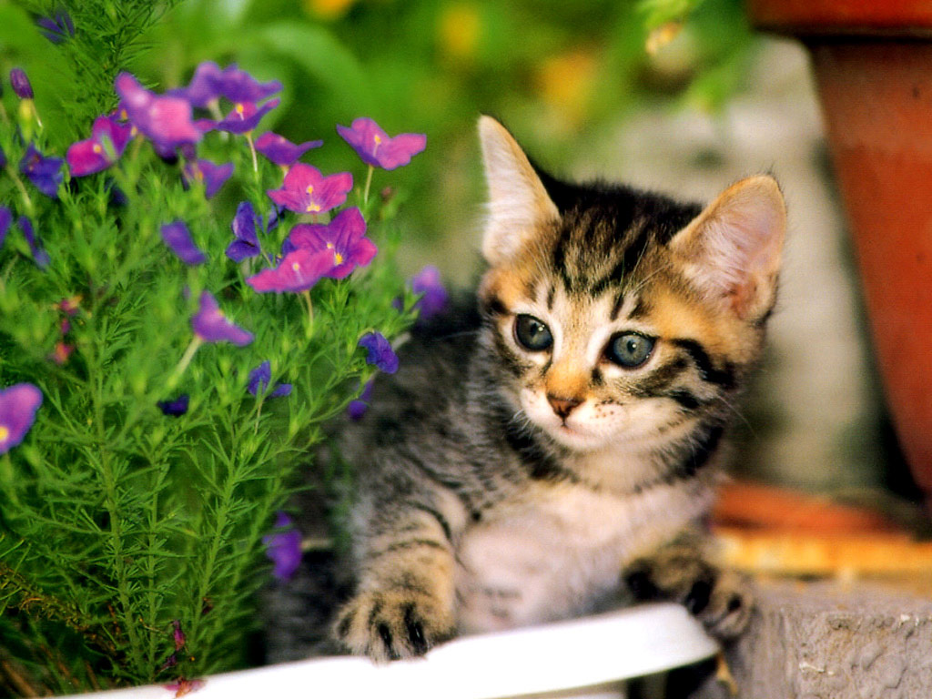 Kitten wallpapers   Kittens Desktop   Flowers   Forest   Bureaublad 1024x768