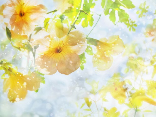 free flower art summer bloom screensaver screensavers download flower 500x375