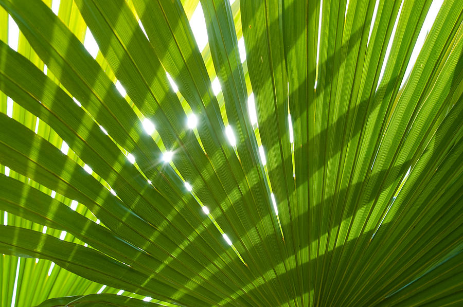 Tropical Palm Leaf by Amanda And Christopher Elwell 900x597