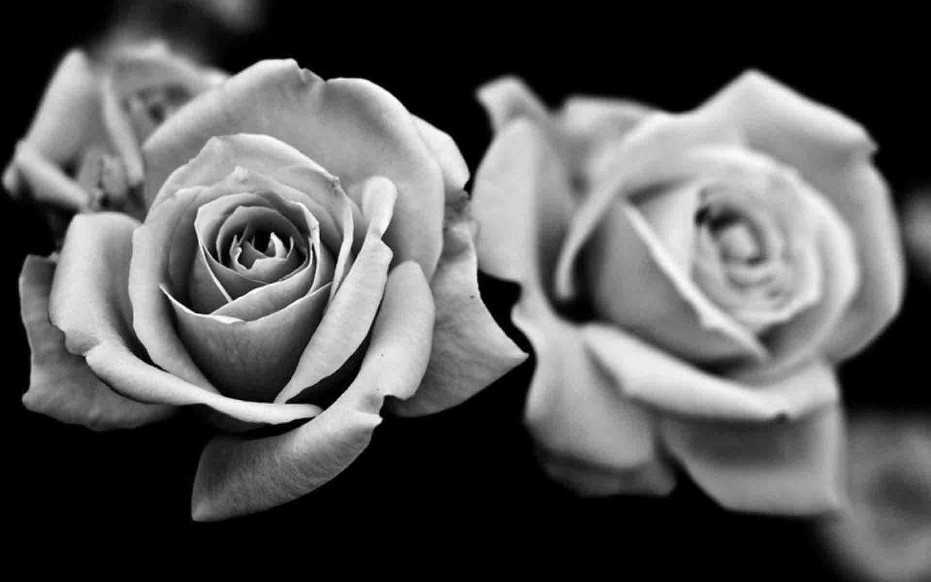 Black and white roses wallpaper wallpapersafari for How to make black roses