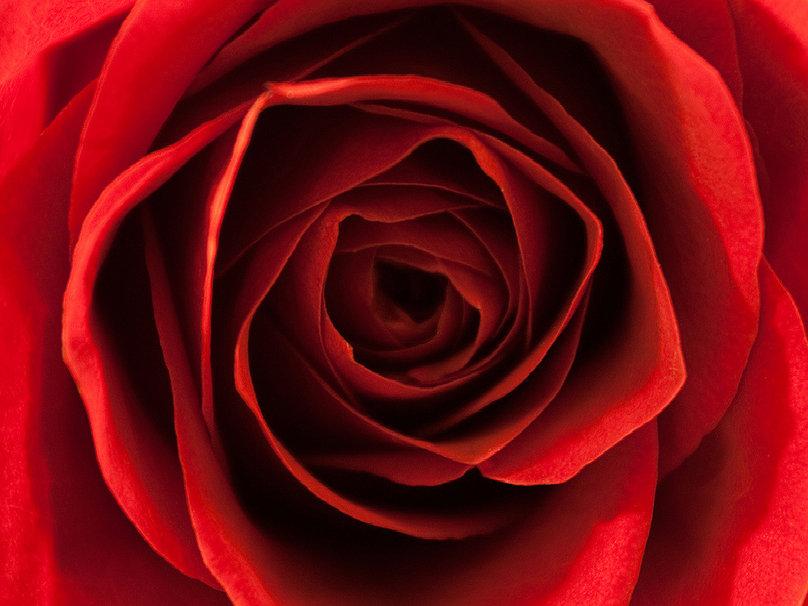 Red velvet wallpaper   ForWallpapercom 808x606