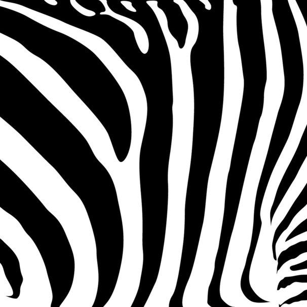 zebra strepen wallpaper   ForWallpapercom 606x605
