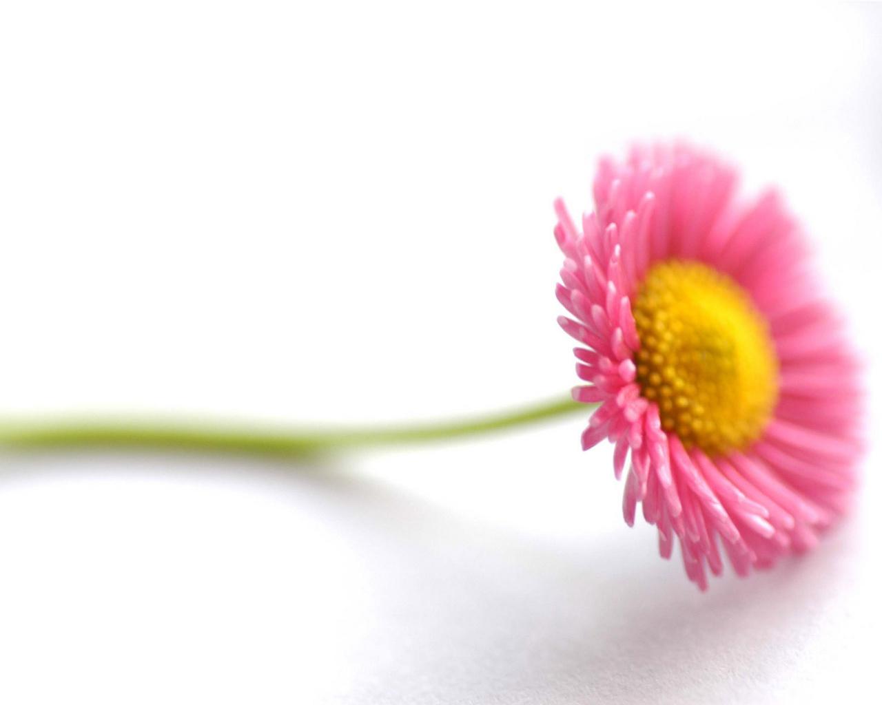beautiful flowers 1280x1024