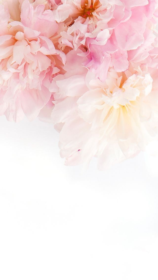Dear Followers have a sweet and peaceful Monday Flower 640x1136