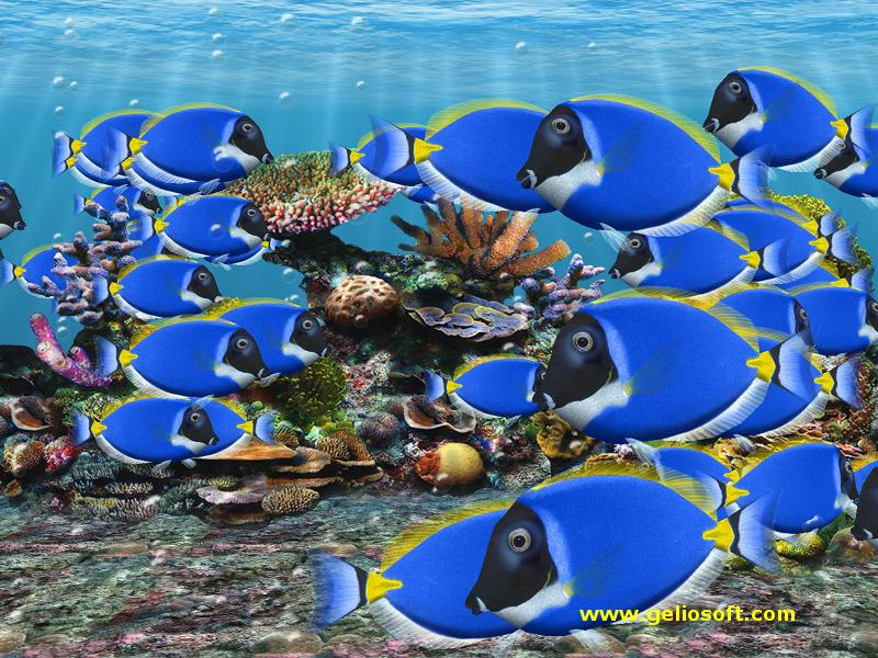 Saltwater fish wallpaper and screensavers wallpapersafari for Moving fish wallpaper
