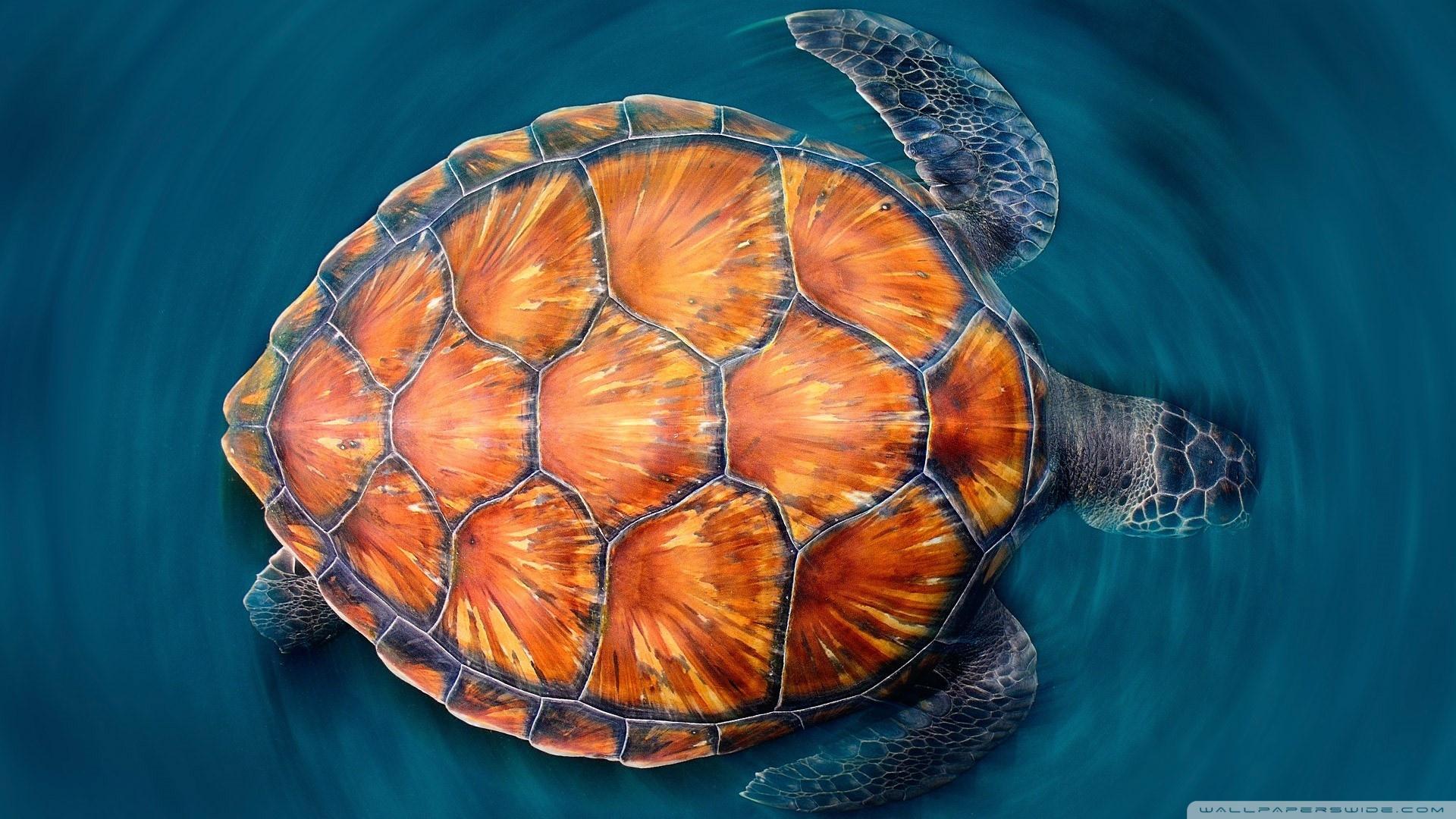 Sea Turtle 4K HD Desktop Wallpaper for 4K Ultra HD TV Tablet 1920x1080