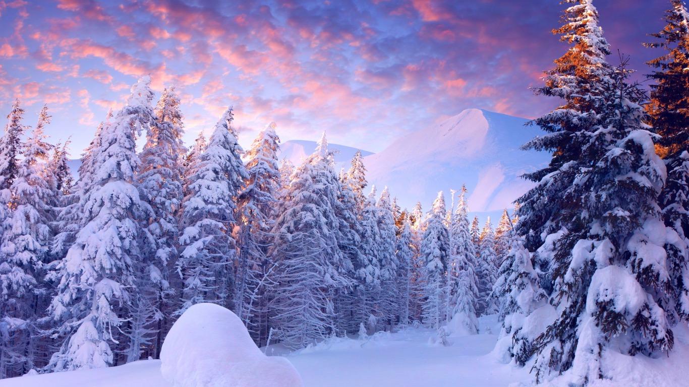 [71+] Winter Wonderland Wallpapers on WallpaperSafari