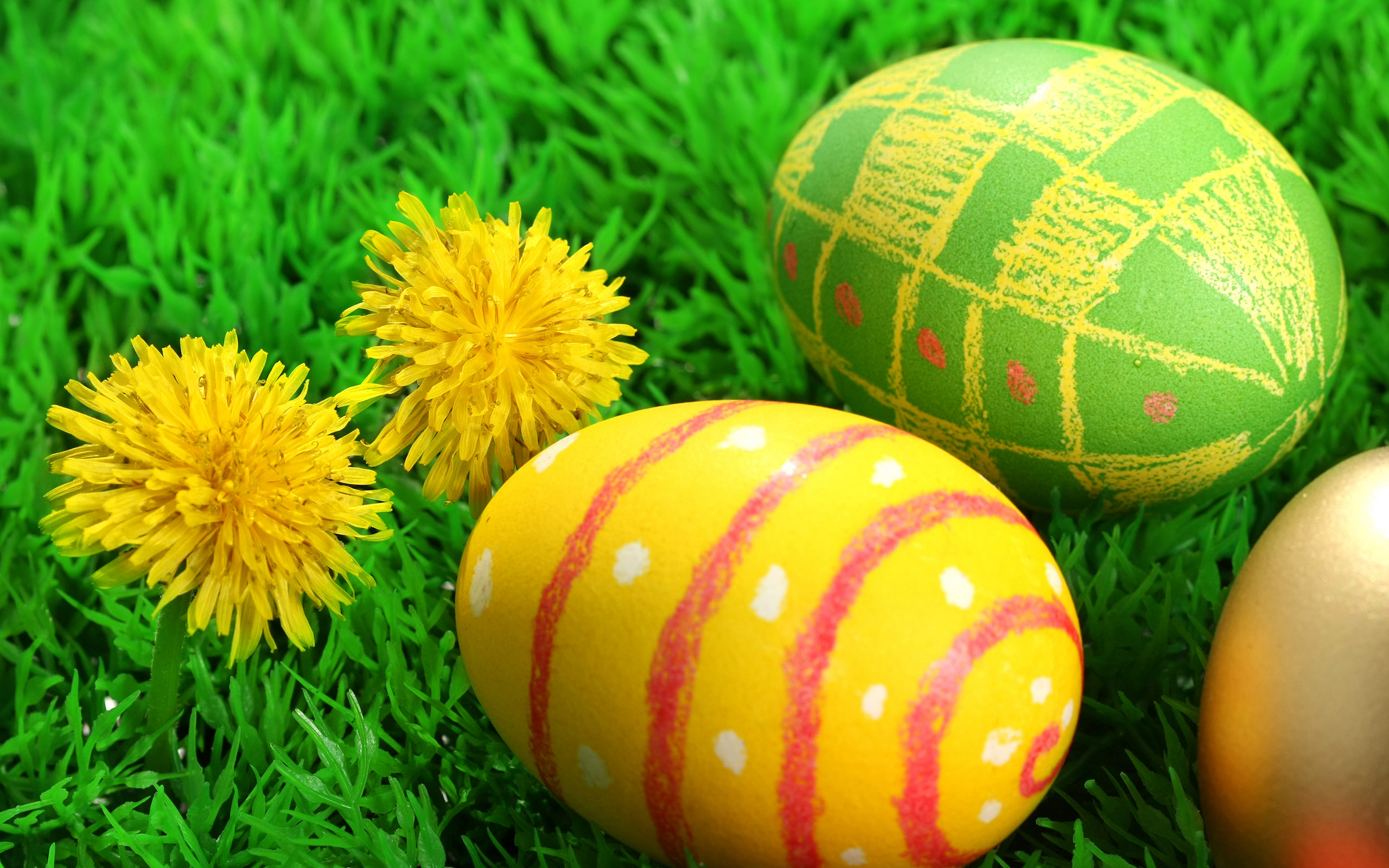 chicks and easter eggs wallpapers for your desktop backgrounds 2560x1600