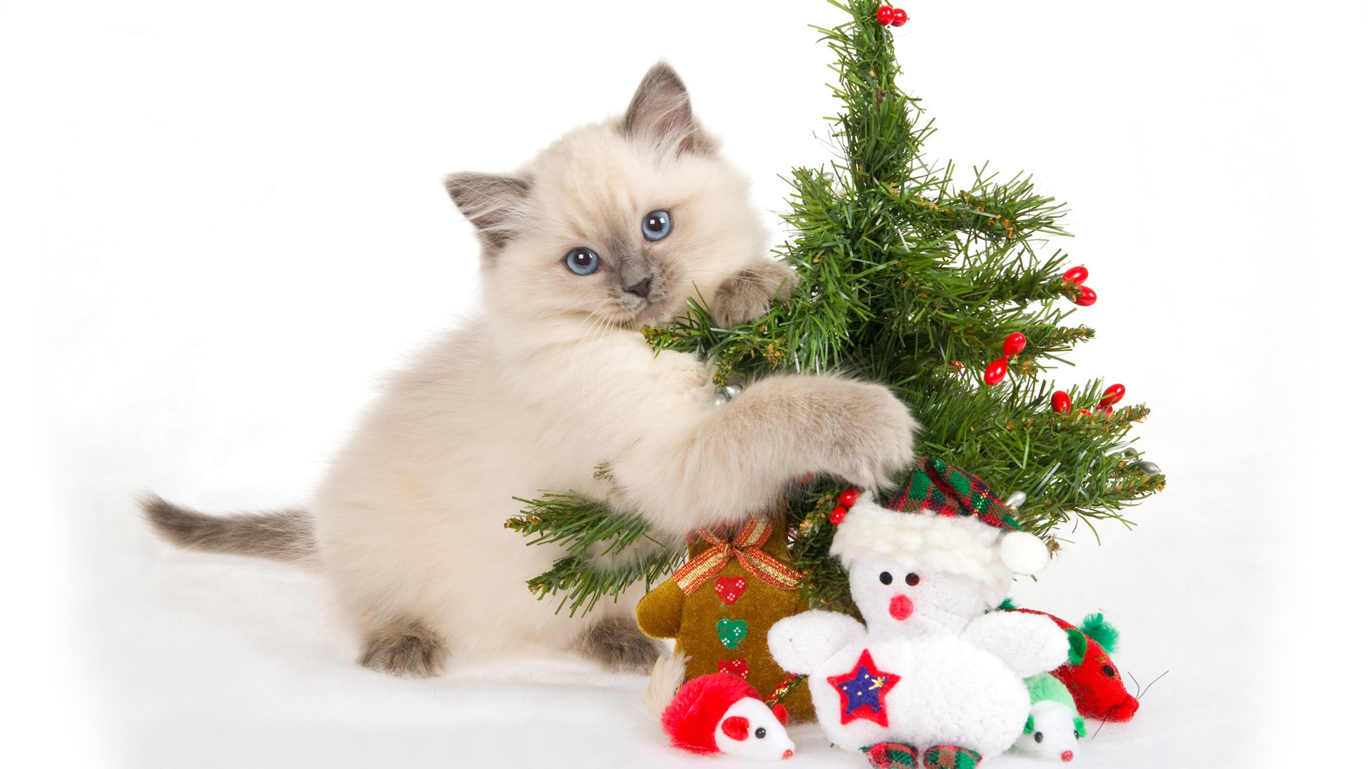 1920x1080 Cat with Christmas tree desktop PC and Mac wallpaper 1920x1080