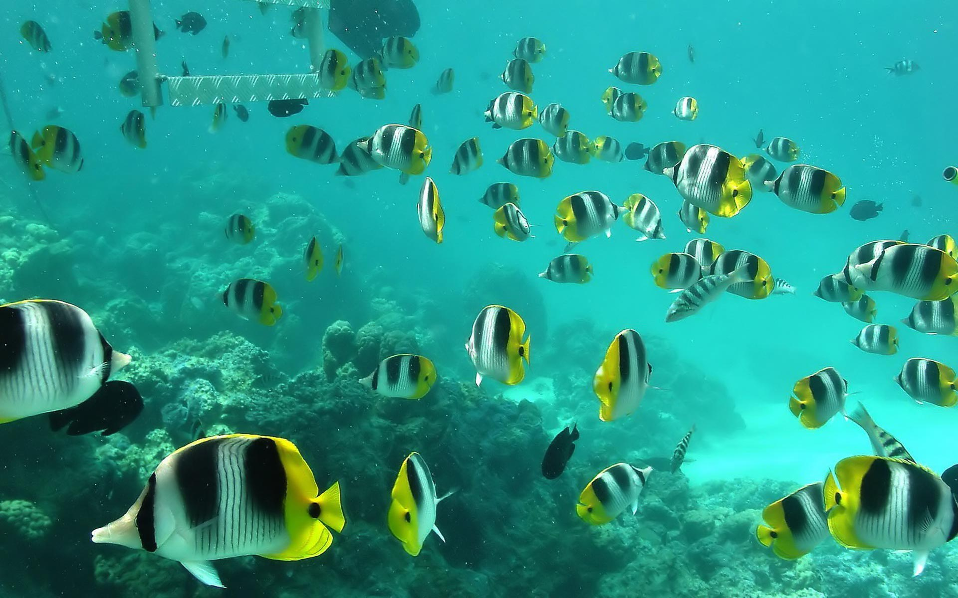 Coral Reef HD Wallpapers Backgrounds 1920x1200