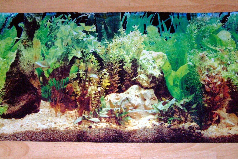 Fish Aquarium Desktop Background 1500x1000