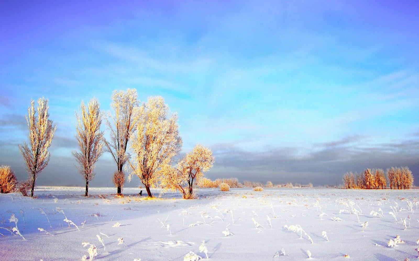 Winter Scenes Wallpaper Free | wallpaper, wallpaper hd ...